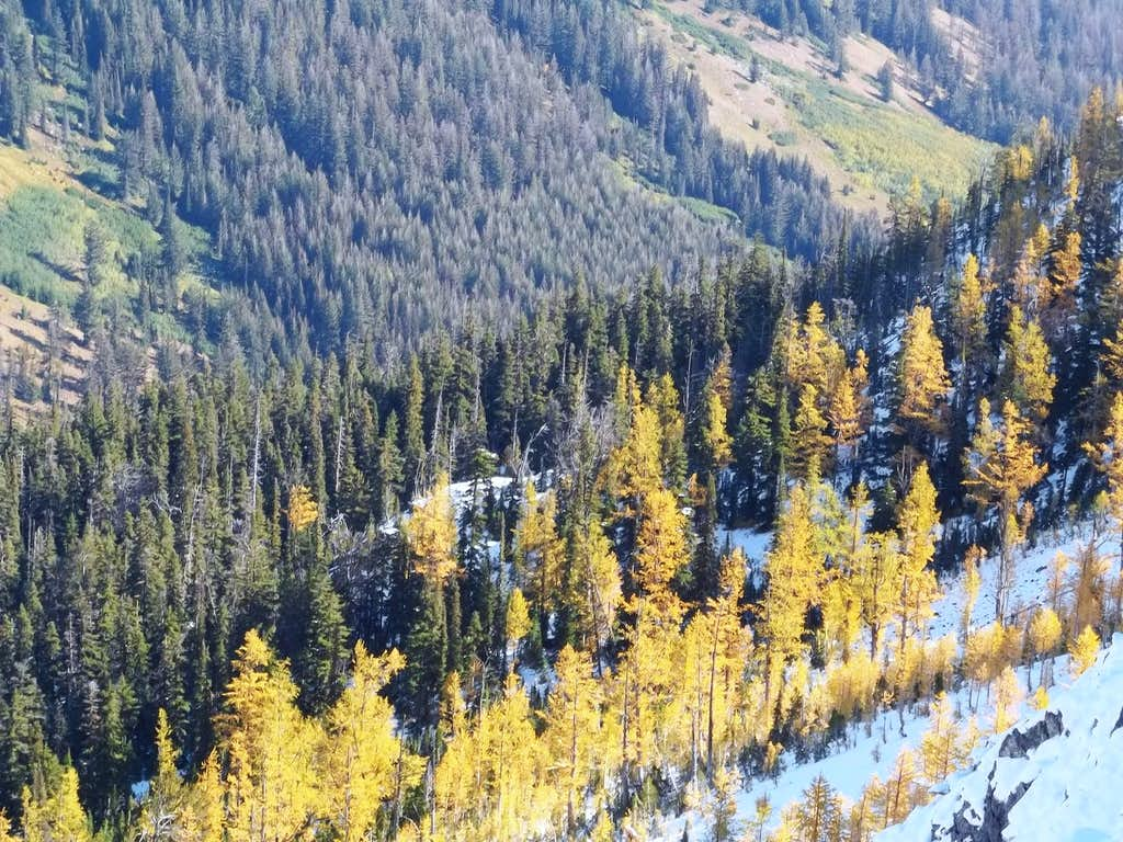 Larches by Not Hinkhouse Peak