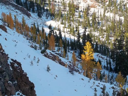 Larch Mania at Not Hinkhouse Peak
