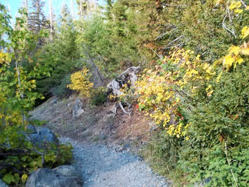 Fall colors at the trailhead of Ingalls Pass