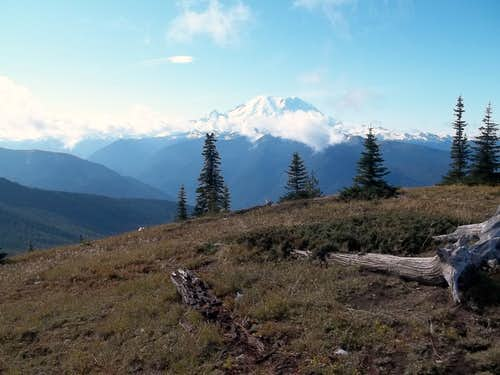 Rainier from Mutton Mountain