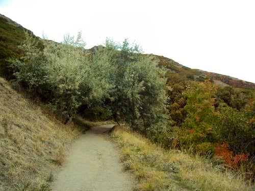 Waterfall Canyon Trail