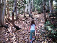 Faint Trail