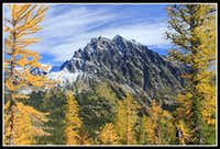 Golden Larch & Mt. Stuart