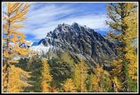 Golden Larch & Mt. Stuart