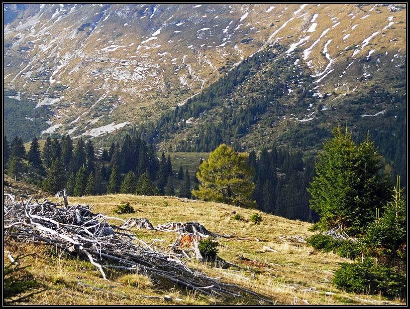 Sija alpine meadow