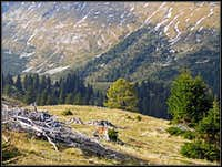 Sija alpine meadow