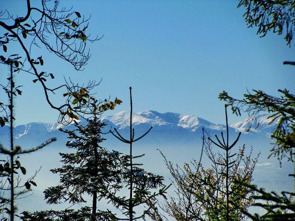 Between trees - Tatry - Czerwone Wierchy