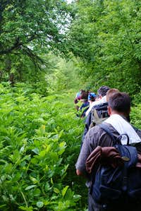 Hikers walking through the bushes