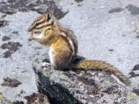 A Cute Chipmunk