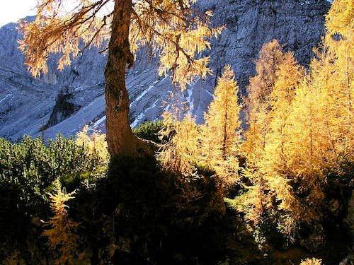 Autumn on the way to Sleme....