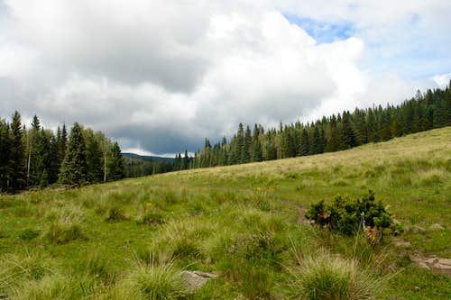 Jacks Creek Trail