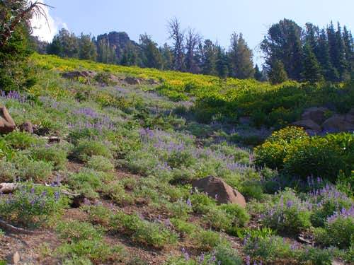 Lush flowers on the slopes