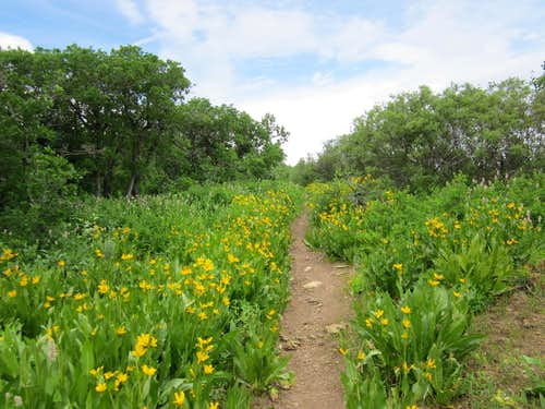 Flowers lined  trail