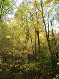 Fall Colors on Little Stony Creek Trail