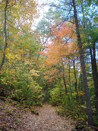 Orange Leaves on Little Stony Creek Trail