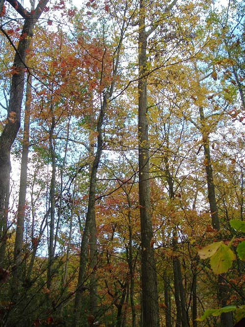 October on Little Stony Creek Trail