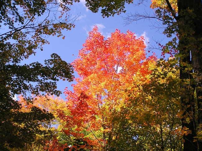 Fall colors on the start of...