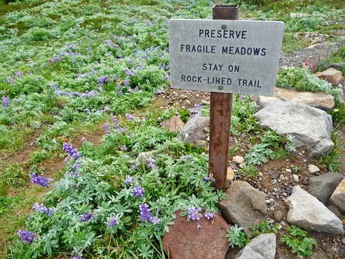 Preserve Fragile Meadows