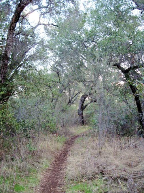 Oak woodlands