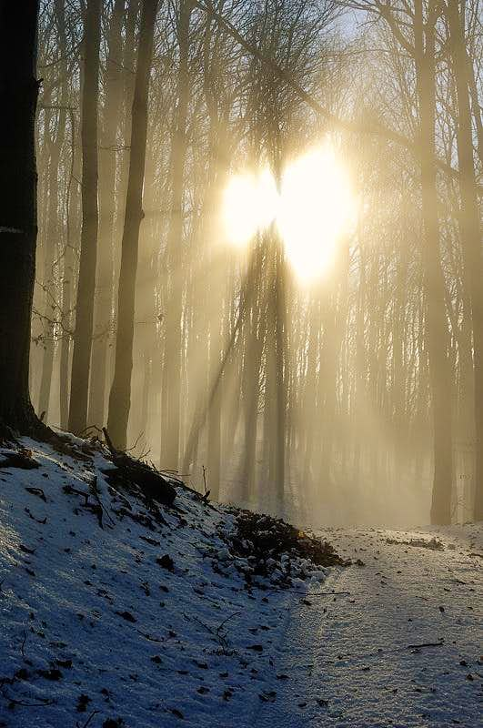 Sun fighting with a fog