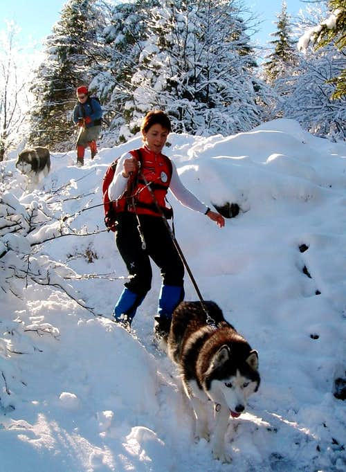 Parmese Apennines - Dog trekking in winter time