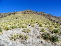 Yucca on Sierra De Las Uvas North