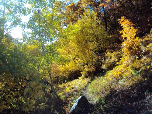 Beus Trail in Fall