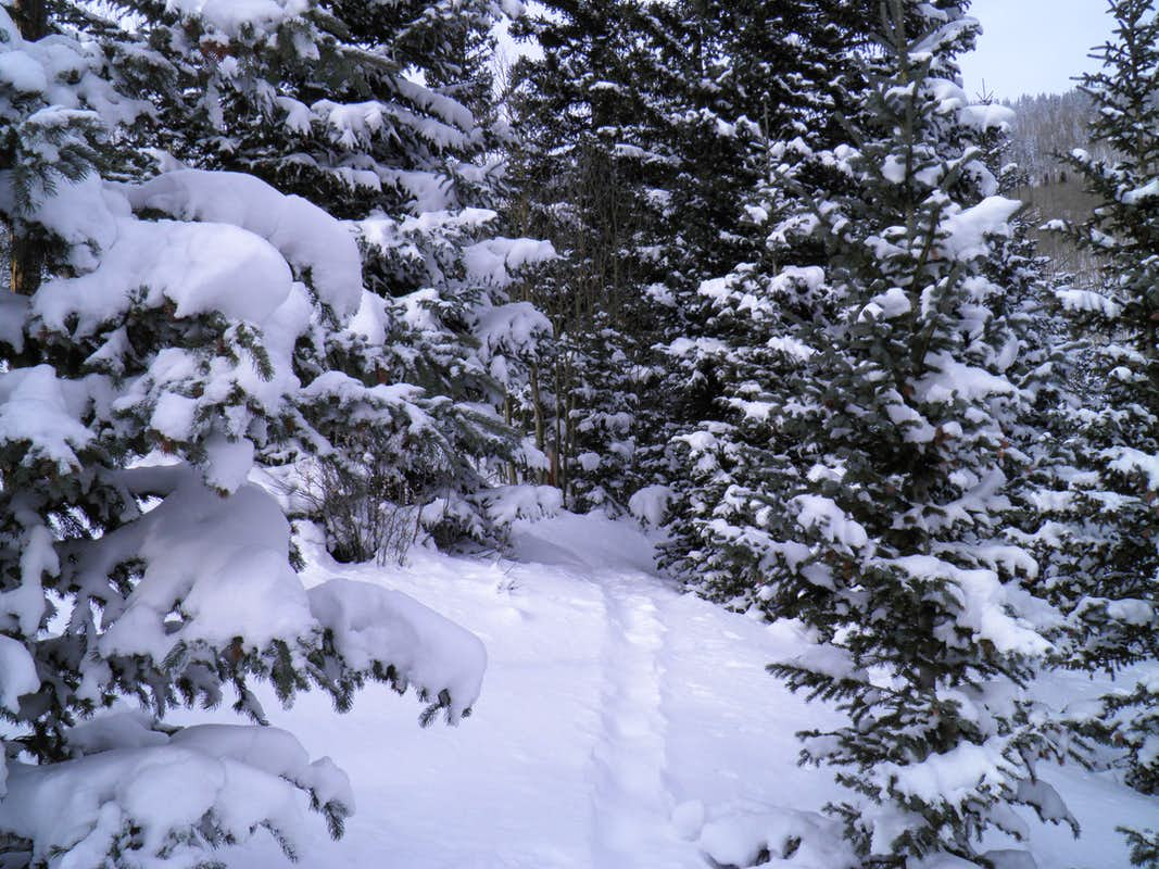 Our Snowshoe tracks