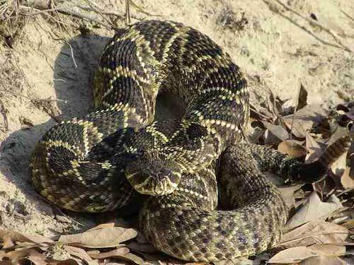 eastern diamondback rattlesnake : photos, diagrams & topos ... diagrams of the engineering design loop