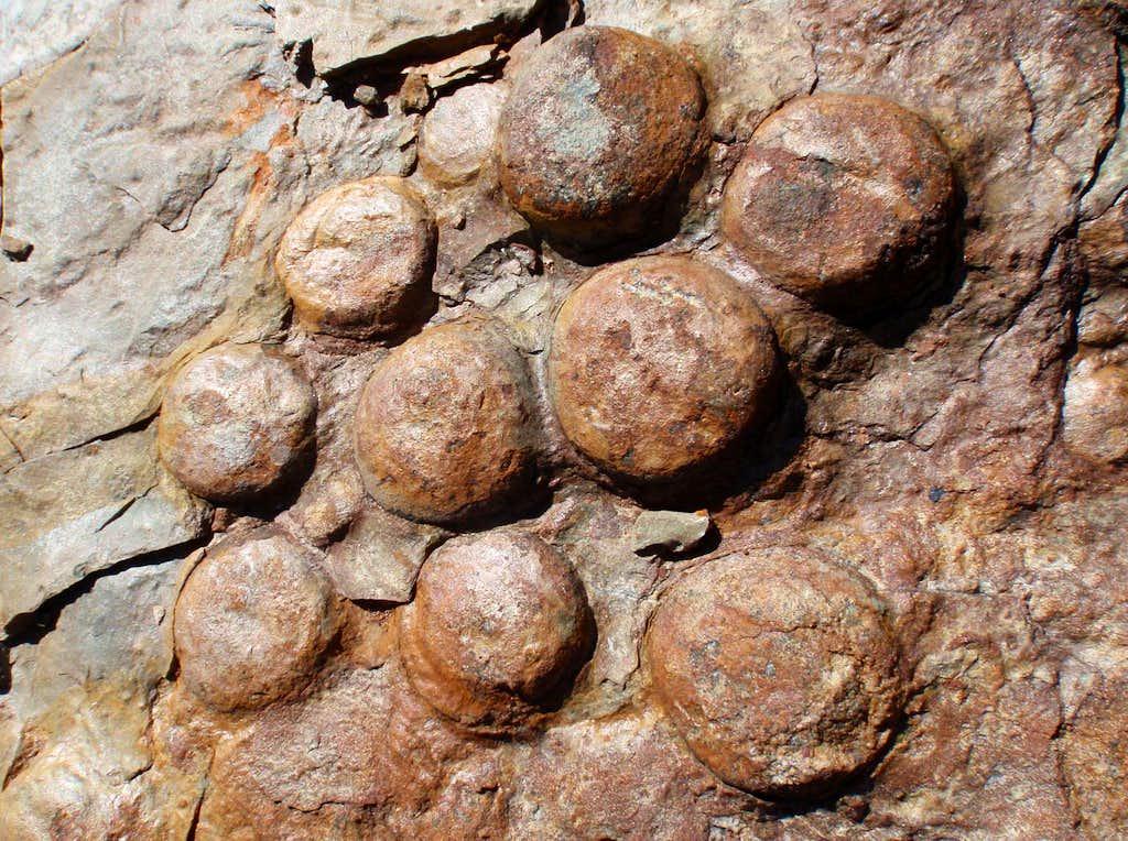 Dinasaur Eggs