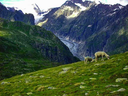 Inhibitians of grassy slopes