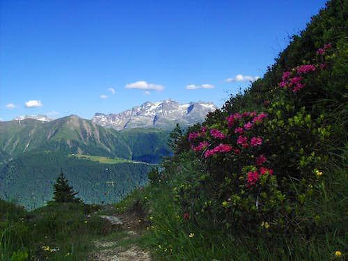Lepontina Alps behind