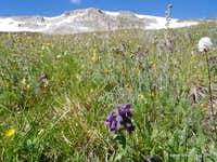 Wildflowers and Peak 9