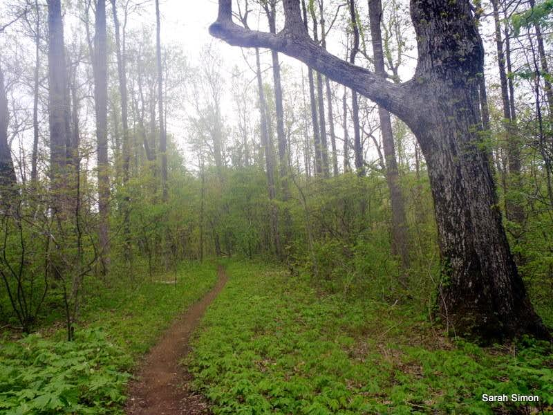 Trail Across Summit Area