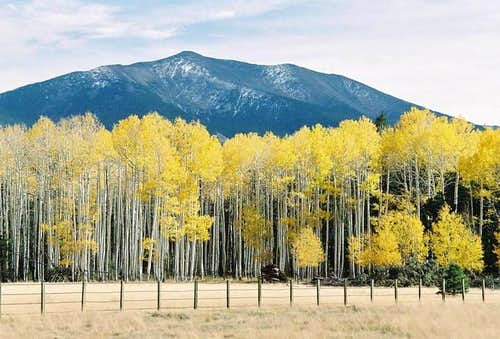 Aspens at the Base Of...
