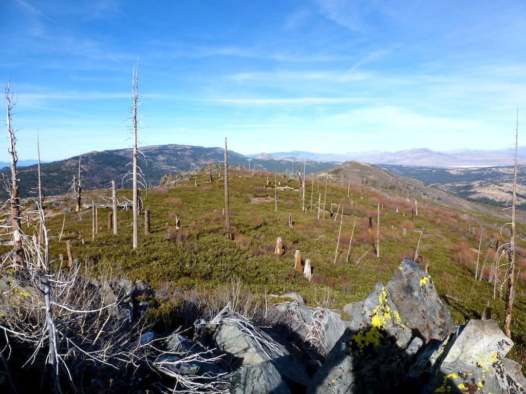Mahogany atop the mountain