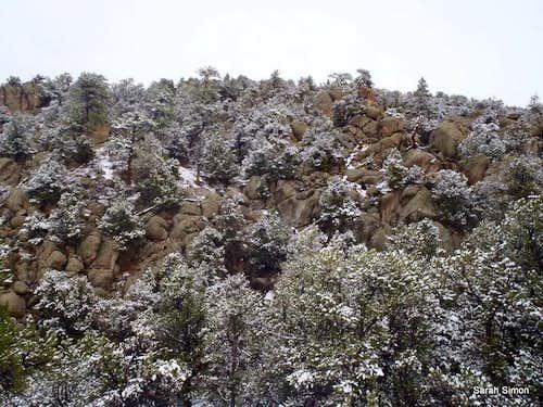 Snow, Pines & Granite