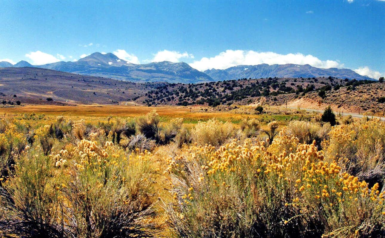 Eastern sierra from the bodie hills photos diagrams for Sierra fish in english