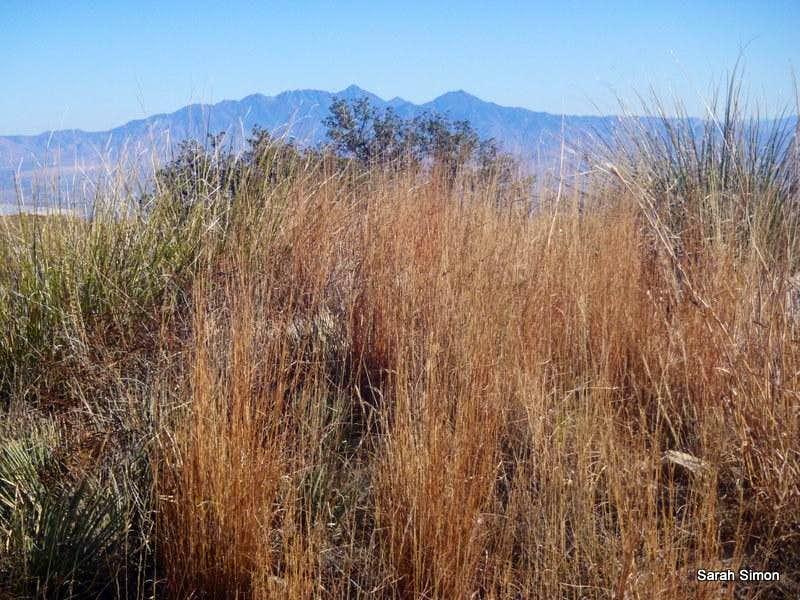 Grassy summit area