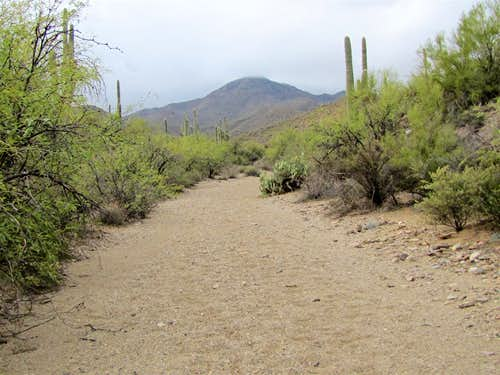 On Brittlebush Trail