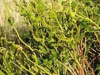 Gaucho Herbs