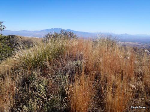 Grassy Placer Peak summit area