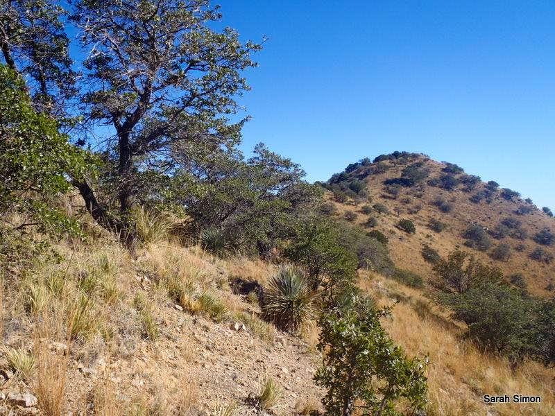 Placer Peak Side-Hilling