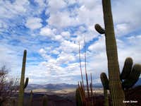 Saguaro and clouds