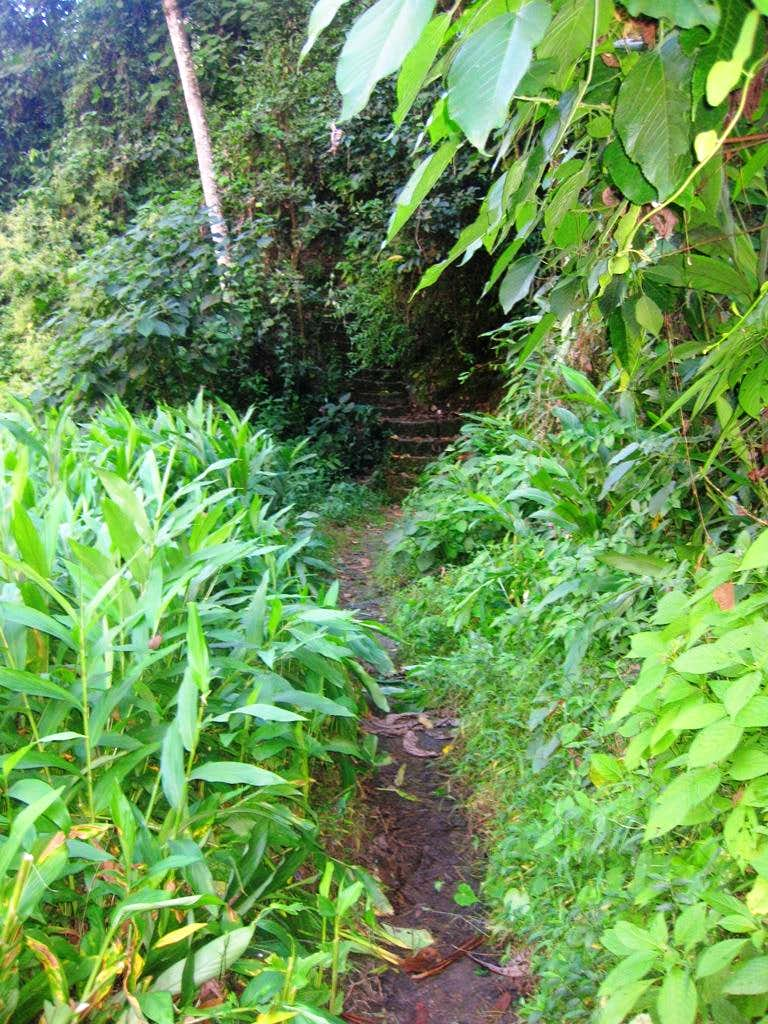 The somewhat overgrown trailhead of Putucusi