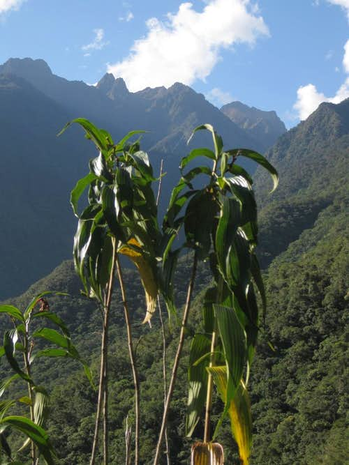 The Cordillera Urubamba - view from the slopes of Putucusi