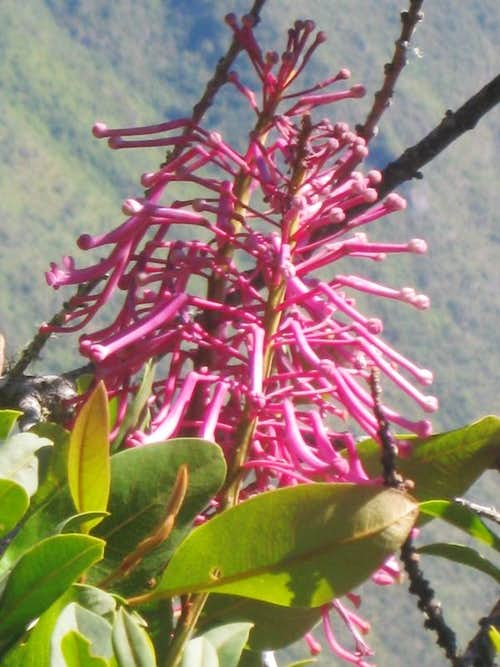 Flower on Cerro Machu Picchu