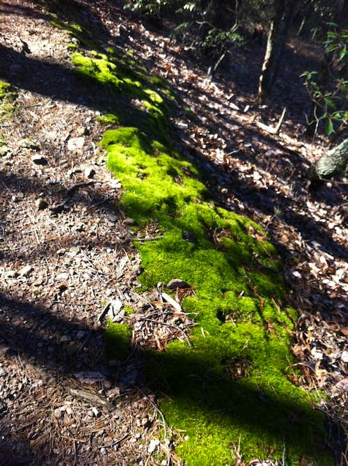 Moss on the Trail