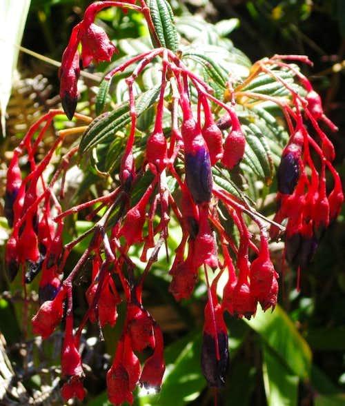 Flowers on Cerro Machu Picchu