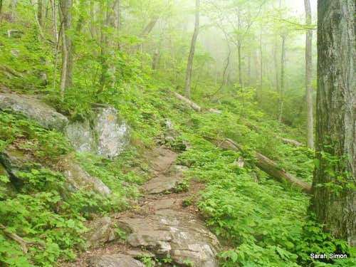 The rocky trail from Blue Mountain
